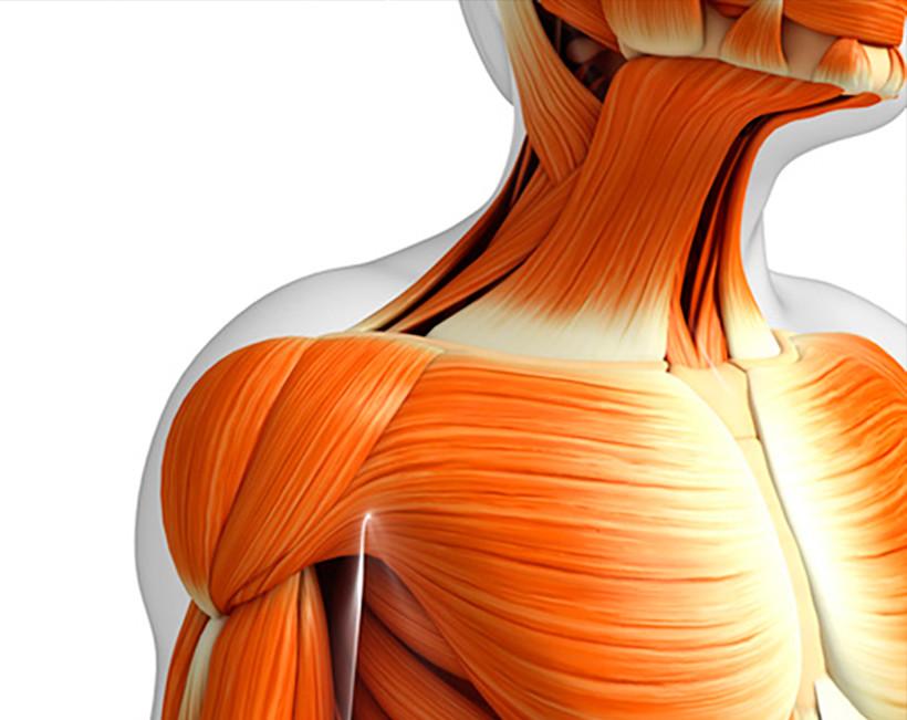 Anatomia per il Movimento